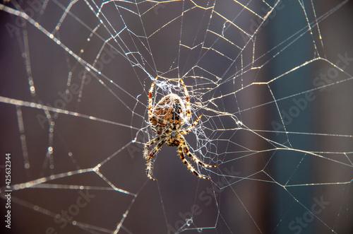 Fotografering Spinne im netz
