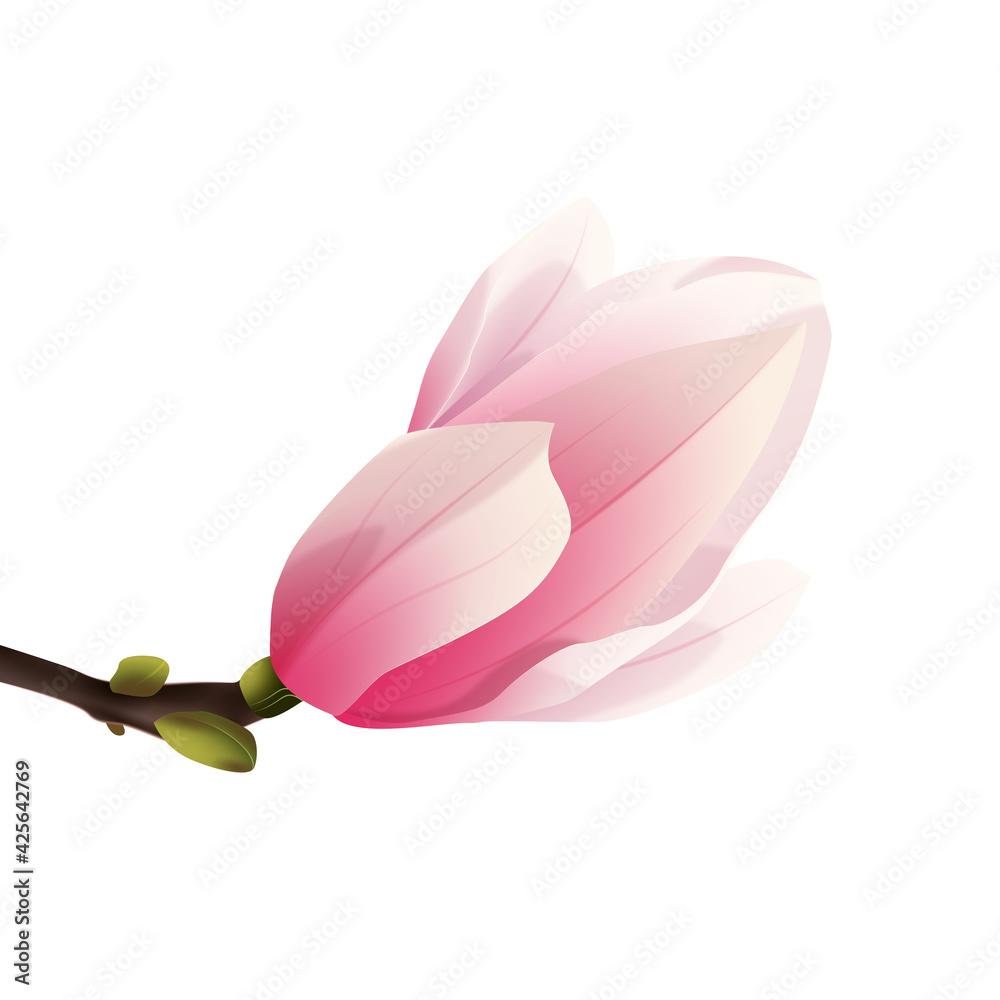 Fototapeta Rozkwitająca magnolia - pąk. Ręcznie rysowany kwiat w kolorze bladego różu z gałązką na białym tle.