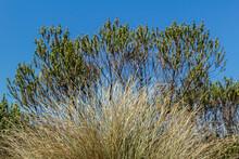 Dry Vegetation In The Winter Landscape In Brazil