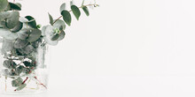 Green Eucalyptus Leaves In Vase On White Table. Front View. Place For Text, Copy Space, Mockup