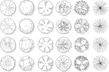Vector Set Of Top View Tree Isolated On White Background