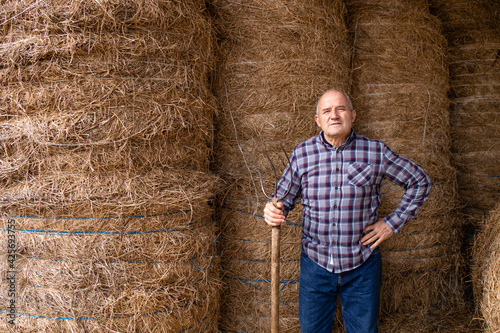 Obraz na plátne Portrait of senior farmer holding pitchfork and standing by hay at the farm taking food for domestic animals