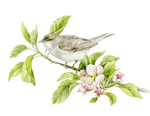 A Bird Sits On A Branch Of An Apple Tree With Leaves And Flowers. Watercolour Illustration.