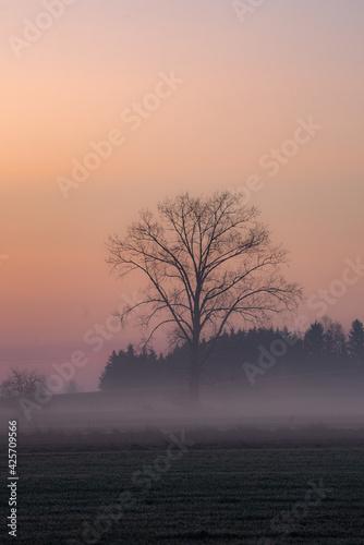 Fototapeta Mgły o wschodzie słońca obraz
