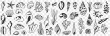 Underwater World Creatures Doodle Set. Collection Of Hand Drawn Sea Creatures Starfish Shells Grass Mussel On Sea Ocean Bottom Isolated On Transparent Background