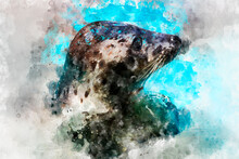 Watercolor, Seal Resting In The Sun In The Water