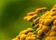 owad i kwiat