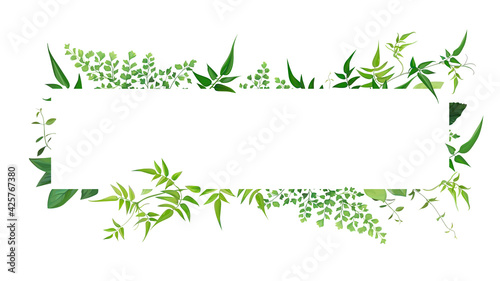 Photographie Fresh natural greenery leaves, branches, jasmine vine, forest fern, herb botanical border, frame, text space