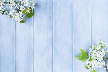 Flowering Spring Pear Or Apple Blossoms Over A Blue Rustic Background With Free Space For Text.