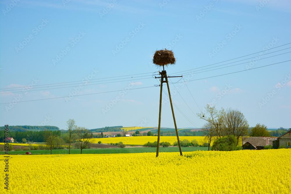 Fototapeta Pole rzepaku i gniazdo bociana na słupie