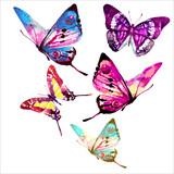 Fototapeta Motyle - butterfly777