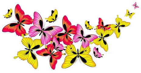 butterfly780