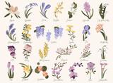 Set of spring modern flowers. Azalea,bluebell,crocus,daffodil,forsythia,grape hyacinth,iris,jasmine,kaffir lily,magnolia,nasturtium,orchid,quince,roze,snowdrop,tulip,ulex,wisteria in pastel colors