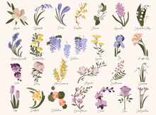 Set Of Spring Modern Flowers. Azalea,bluebell,crocus,daffodil,forsythia,grape Hyacinth,iris,jasmine,kaffir Lily,magnolia,nasturtium,orchid,quince,roze,snowdrop,tulip,ulex,wisteria In Pastel Colors