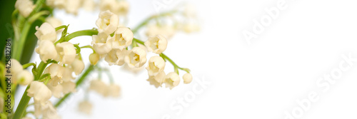 Fotografie, Obraz Lily of the valley flower blossom, white panoramic background