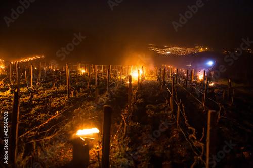 Fototapeta Lutte contre le gel de printemps dans les vignes de Chablis en Bourgogne - Technique des bougies ou chaufferettes (2016) obraz