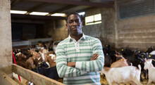 Portrait Of Confident Successful African-American Man Engaged In Goat Breeding Posing In Goat Barn