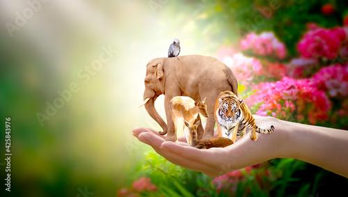 Fotografie, Obraz Earth Day, World Animal or Wildlife Day concept