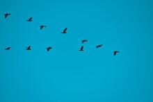 Bird Over Sea. Birds Fly In Summer Over The Sea