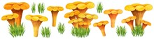 Huge Chanterelle Watercolor Set With Different Bunches, Front View. Golden Girolles In The Grass. Easy To Create Mushroom Poster. Yellow Edible Mushroom And Grass Bunch Isolated On White Background.
