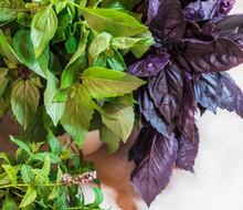 Close Up Studio Shot Of Fresh Green And Red Basil Herb Leaves Mix . Sweet Genovese Basil And Purple Dark Opal Basil.