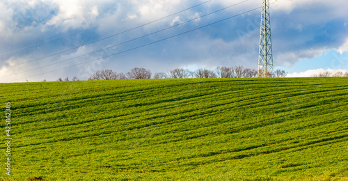 Fototapeta Green & Sky obraz