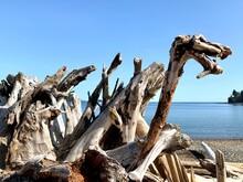 Remarkable Piles Of Driftwood On The Beach, Looks Like A Dinosaur.