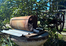 Lovely Cat Caught Sleeping In The Water Well Bucket.