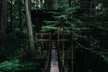 Building In A Heights Of Green Moody Forest
