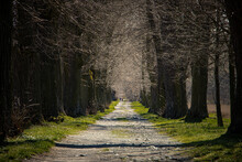Stony Path In An Alley With Trees Without Leaves