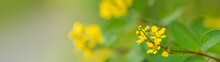 Closeup Of Mini Yellow Flower Under Sunlight With Copy Space Using As Background Natural Plants Landscape, Ecology Cover Page Concept.