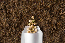 One White Opened Paper Pack Of Dry Pea Seeds On Fresh Dark Soil Background. Closeup. Preparation For Garden Season In Early Spring. Top Down View.