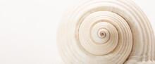 Shell Texture Swirl