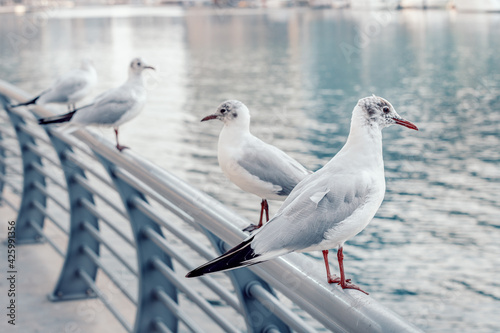 Seagulls sit on the parapet of the embankment in the Dubai Marina area Fototapet