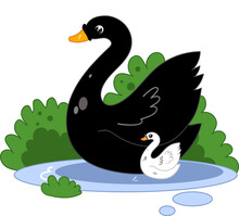 Cute Mother Swan With A Baby Child. Cartoon Style Illustration For Nursery Books, Postcards For Mother's Day. Swimming In The Pond Birds. Animal Clip Art.