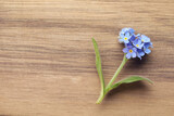 Beautiful blue Forget-me-not flower on wooden table, top view. Space for text