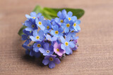 Beautiful blue Forget-me-not flowers on wooden table, closeup