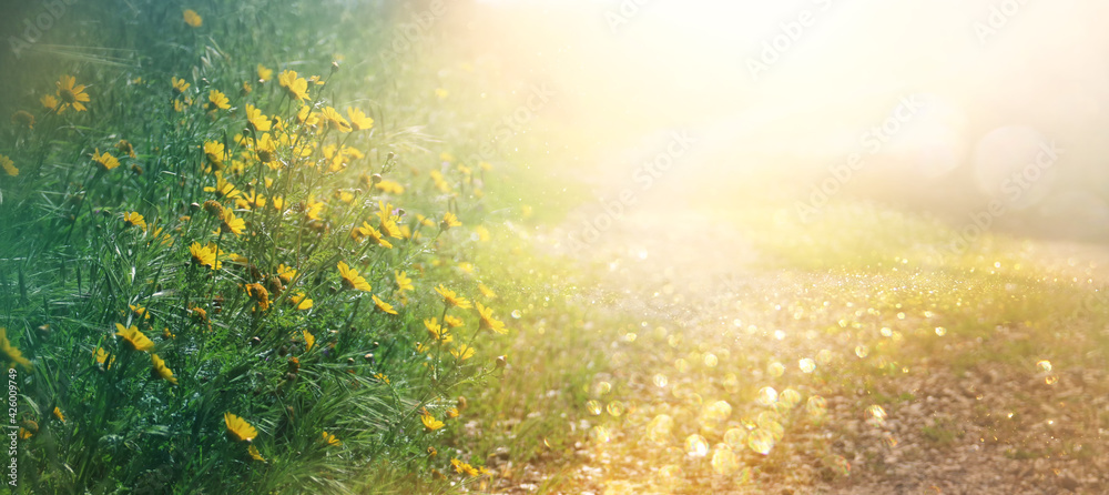 Fototapeta abstract dreamy photo of spring meadow with wildflowers