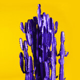 Violet cactus on yellow background. Creative design