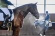 Ogolony gniady koń