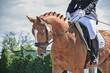Koń rasy Deutsches Sportpferd.