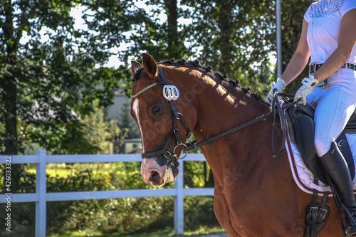Głowa gniadego konia  - fototapety na wymiar