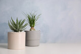 Beautiful Aloe and Nolina in pots on white table, space for text. Different house plants