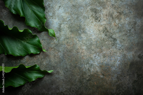 Fototapeta Creative nature layout made of tropical leaves. Summer concept. Fern Palm and monstera leaf on wall. Nature beach background layout with free text space. obraz