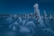 Full Moon Rising Over A Snow Covered Winter Landscape, Tykky, Looking Across Russia From Kuntivaara Fell, Kuusamo, Finland
