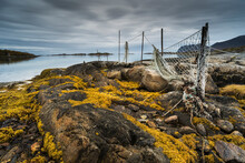 Seaweed Covered Rocks And Hanging Fishing Nets At Low Tide, West Senja, Norway, Scandinavia