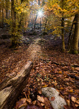 Autumn Colors In A Wood With A Sun Burst Between The Trees, Veneto, Italy