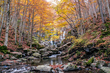 Autumn Woods And Waterfall In The Background, Dardagna Waterfalls, Parco Regionale Del Corno Alle Scale, Emilia Romagna, Italy