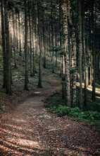 Path In The Woods With Sun Light Filtering Through The Trees, Dardagna Waterfalls, Parco Regionale Del Corno Alle Scale, Emilia Romagna, Italy