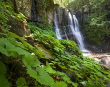 Acquatic Plants At Dardagna Waterfalls In Summer, Parco Regionale Del Corno Alle Scale, Emilia Romagna, Italy